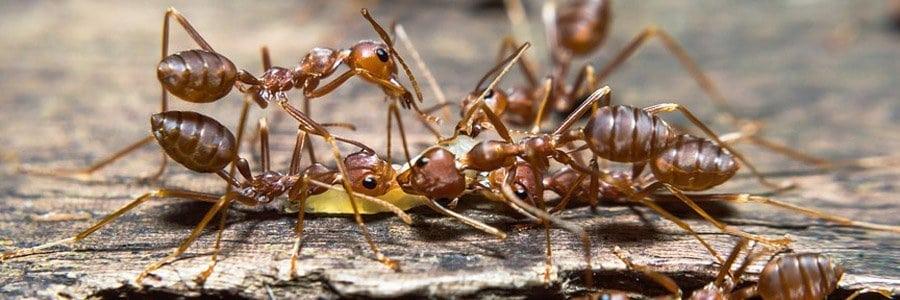 ant control dorset hampshire bournemouth poole christchurch wimborne wareham ferndown