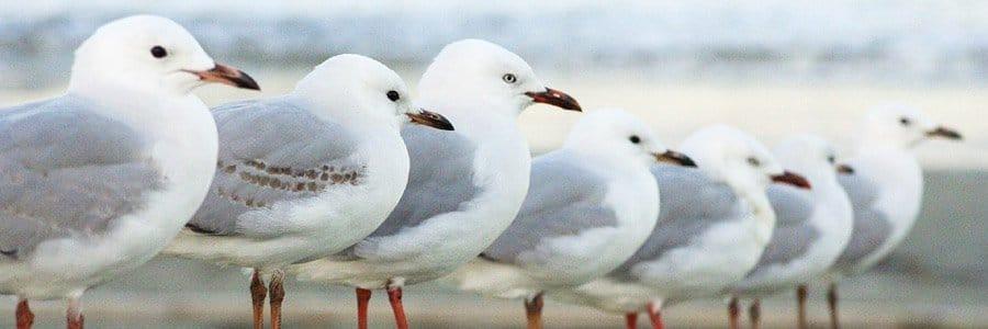 bird control dorset hampshire bournemouth poole christchurch wimborne wareham ferndown