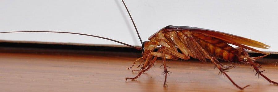 cockroach control dorset hampshire bournemouth poole christchurch wimborne wareham ferndown