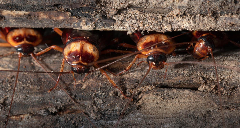 pest control cockroaches dorset hampshire bournemouth poole christchurch wimborne wareham ferndown
