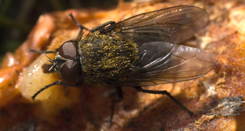 pest control insects dorset hampshire bournemouth poole christchurch wimborne wareham ferndown